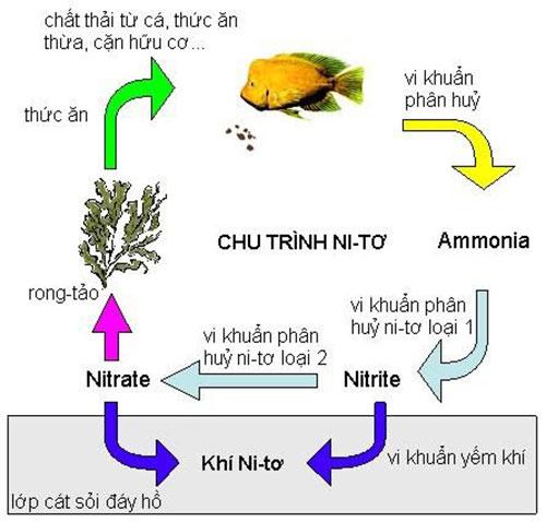 tong-nito-trong-nuoc-thai