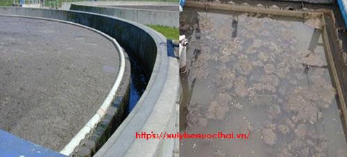 Xem ngay các khắc phục bùn vi sinh nổi bể lắng hiệu quả nhất 2020