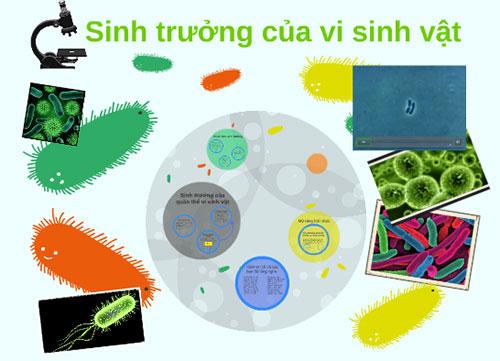 Sinh trưởng của vi sinh vật trong hệ thống xử lý nước thải tại Việt Nam
