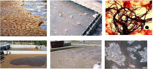 vi khuẩn dạng sợi là nguyên nhân chính làm bùn vi sinh khó lắng và nổi bọt