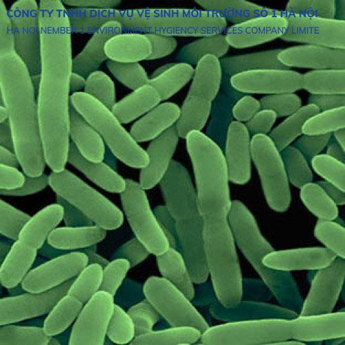 Vi khuẩn nitrosomonas trong nitrat hóa