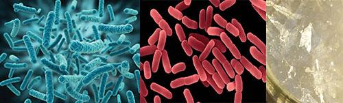 Các nhóm vi khuẩn trong bùn vi sinh kỵ khí