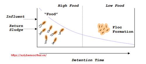 5 giai đoạn vi khuẩn trong bể hiếu khí