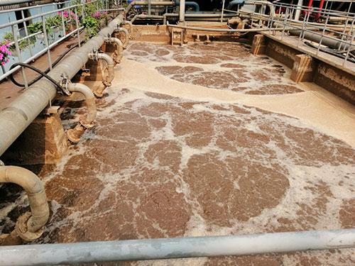 Hướng dẫn nuôi bùn vi sinh hiếu khí
