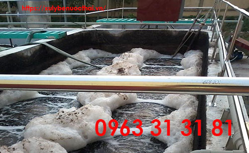 cung cấp bùn vi sinh trong xử lý nước thải