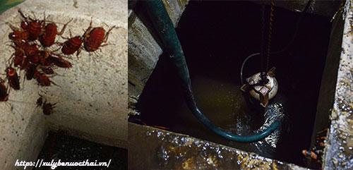 côn trùng bám vào thành bể
