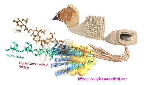 Cách xử lý Lignin trong nước thải sản xuất giấy hiệu quả