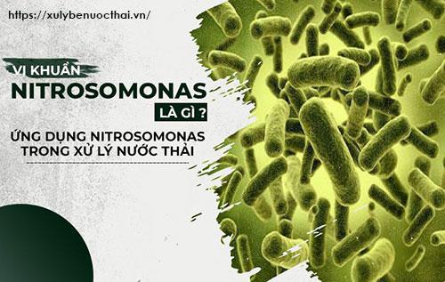 Vi khuẩn Nitrosomonas
